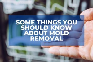 Some Things You Should Know About Mold Removal